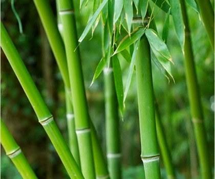 Le bambou dans la cuisine.
